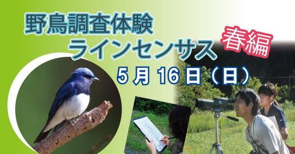 【5/16】野鳥調査体験 ラインセンサス春編