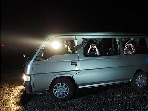 night_safari.JPG